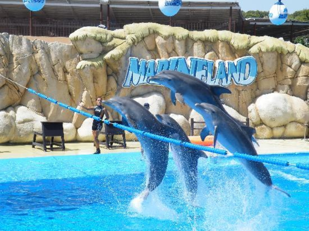 Marineland catalunya in barcelona water park in spain for Swimming pool show barcelona
